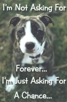 animal shelters, second chances, pit bulls, stop animal cruelty, stop bullying