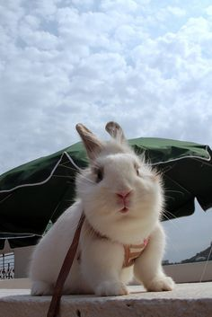 Bun out for a walk...