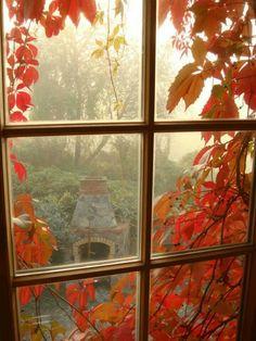 Autumn: Looking Out For Autumn