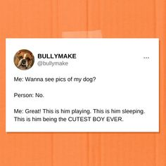 You'll look at my dog photos and you'll like it. Funny Dog Pictures, Look At Me, Dog Photos, Funny Dogs, Cute Boys, Photo And Video, Instagram, Funny Dog Photos, Cute Teenage Boys