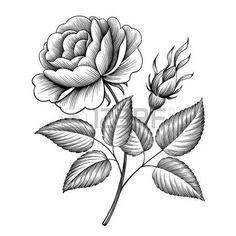 Resultado de imagen de vintage rose illustrations