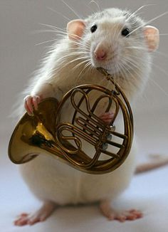 Combination of cute and musical talent.