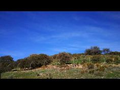 Listen to the Wolves Howl at Lobo Park Antequera | Marbella Escapes | Guided Private Tours, Excursions and Day Trips