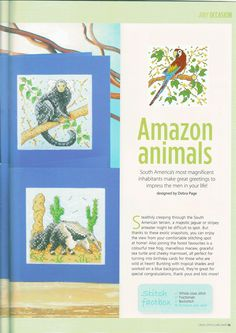 62 - Amazon Animals