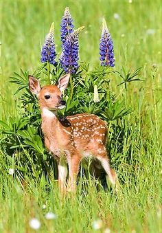 The fresh smell of spring, plants, green grass, and lavender :) Baby Animals Pictures, Cute Animal Pictures, Cute Baby Animals, Funny Animals, Nature Animals, Animals And Pets, Beautiful Creatures, Animals Beautiful, Deer Photos