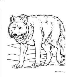 Wolves Coloring Sheets For Kids