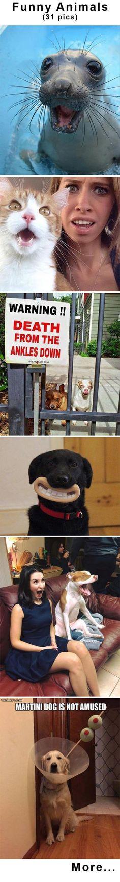 Funny Animals (31pics) #dailygags #funnyanimals