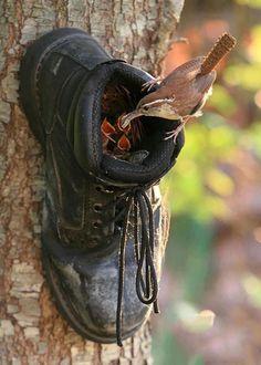 nido de pájaro dentro de un zapato en un árbol