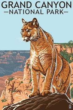 Grand Canyon National Park - Mountain Lionÿ- Lantern Press Artwork