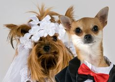dog wedding, best pet, unique wedding idea, adding your pet to the wedding.