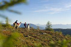 Lama trekking at  Katschberg, c Franz Gerdl Mountains, Holiday, Nature, Summer, Travel, Ski Trips, Winter Vacations, Summer Vacations, Family Activity Holidays