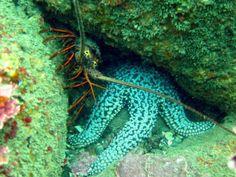 Sea Life, Buddies