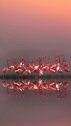 Purple sunset by Anna Cseresnjes - beautiful flamingos Beautiful Birds, Animals Beautiful, Cute Animals, Wild Animals, Stunningly Beautiful, Beautiful Pictures, Purple Sunset, Tier Fotos, Jolie Photo