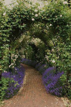 Romantic rose tunnel: along back mtz fence?