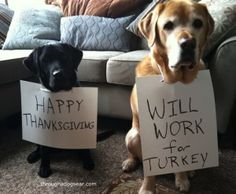Happy Thanksgiving! This is so cute!i remember my Mom peeling pieces of turkey off the carcass and feeding them to Darla.. I was horrified and Darla was in love! I wanted that turkey for leftovers but my Mom was having a little spell of dementia...