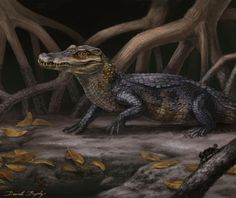 This reconstruction of Culebrasuchus mesoamericanus represents a new primitive species University of Florida researchers believe may represent an evolutionary transition between caimans and alligators. The animal is one of two new crocodilian species from the Miocene in Panama about 20 million years ago UF researchers describe in a study appearing online in the Journal of Vertebrate Paleontology. (Credit: Florida Museum of Natural History illustration by Danielle Byerley)