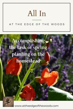 Accomplishing the task of spring planting on the homestead Permaculture, Planting, Homesteading, Make It Yourself, Spring, Blog, Plants, Blogging