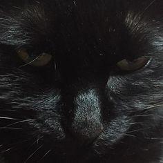 くろすけさんは、こちらを見ています。  #猫 #黒猫 #ネコ #クロネコ #cat  #blackcat #кот #Черныйкот  #katze #schwarzekatze #gattanera #검은고양이 #kissa #mustakissa #chatnoir #gatonegro #gatopretoimaizumi.takayuki2016/02/21 16:00:32