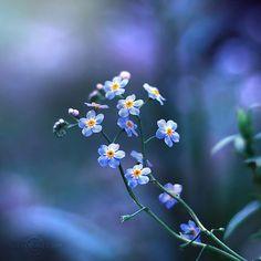 @дневники — Избранное :: Smell of Summer Night | Inspiration Дикие Цветы, Красивые Цветы, Татуировка Растения, Маленькие Цветы, Синие Цветы, Сады, Цветочные Композиции, Окрашенные Цветы, Фоновое Изображение Для Экрана Телефона