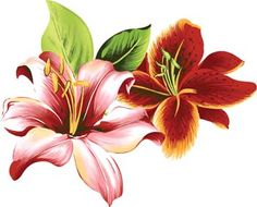 Lilies clipart vintage from Berserk on. 15 Lilies clip art free vintage professional designs for business and education. Clip art is a great way to help illustrate your diagrams and flowcharts. Clipart, Hawaiian Flowers, Hibiscus Flowers, Vintage Clip Art, Decoupage, Vietnam Voyage, Vector Flowers, Love Is Free, I Wallpaper