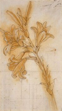 Title: Lily Artist: Leonardo da Vinci – Nationality: Italian Completion Date: circa 1480 Style: Early Renaissance Genre: Sketch and Study Media: Chalk and Ink on Paper Location: Royal Collection, Windsor Landscape Drawings, Art Drawings, Illustration Botanique, High Renaissance, Botanical Art, Oeuvre D'art, Art History, Painting & Drawing, Artsy
