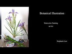 (4781) Botanical Illustration - Watercolor Painting An Iris - YouTube