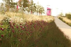 Olympic Gardens Europe by Sarah Price. Swathes of Deschampsia and Molinia grasses are interspersed with perennials such as Sanguisorba officinalis, Lythrum virgatum and Succisa pratensis.