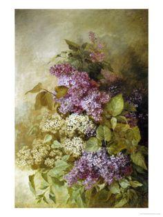 Study of Lilac Giclee Print by Claude Massman at Art.com