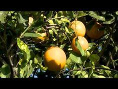 CITRUS FARM - Meet a Farmer   Dale Murden - YouTube