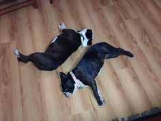 Lilo and Gaia - ying and yang