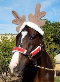 The wonderful Lava Man looks ready for Christmas!