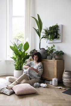 230 Ideeen Over Planten In Huis Intratuin In 2021 Kamerplanten Hangende Planten Groene Planten
