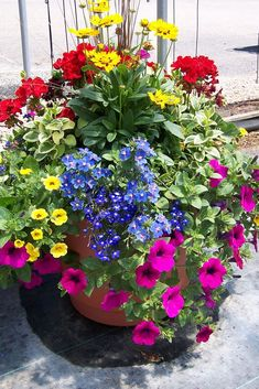 Container Flowers Ideas New Patio Flower Pots Ideas Garden Container Planting Ideas Crates and sourc Container Flowers, Flower Planters, Garden Planters, Full Sun Container Plants, Full Sun Planters, Geranium Planters, Porch Planter, Balcony Gardening, Kitchen Gardening