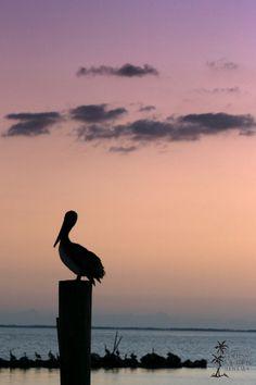 #Sunset on St. George Island, #Florida #ocean #pelican