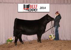 me and my limflex heifer Show Cattle, Thats Not My, Beef, Horses, Cute, Animals, Meat, Animales, Animaux