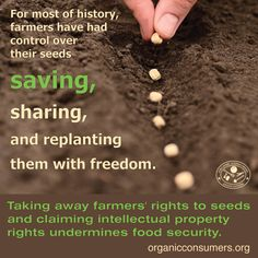 Monsanto and other biotech bullies have monopolized the seed industry and implemented a system where small farmers are losing the right to grow and save seeds that have been planted on this Earth for centuries.   #MonsantoMakesUsSick