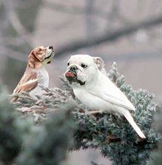Image of: Dirds Birds With Dog Heads And Dogs With Bird Bodies Are Dirds Youtube 25 Best Bird Dog Pics Images Dogs Birds Dog