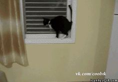 "lmao!! this is the best gif ever - ""cautious cat"" - click to animate"