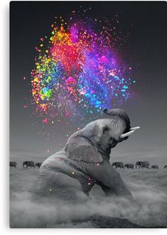 True Colors Within Mini Art by Soaring Anchor Designs - Without Stand - x Elephant Colour, Colorful Elephant, Pink Elephant, Indian Elephant Art, Elephant Photography, Animal Photography, Whimsical Photography, Tattoo Fe, Framed Art Prints