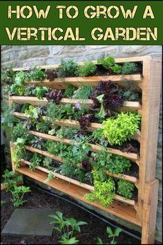 Learn How to Grow a Beautiful Vertical Garden!