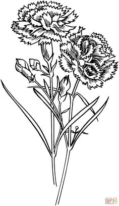 Carnation Art Inspiration Coloring Pages Drawings Flowers