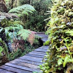 Parque Pumalin Chile, Patagonia, South America, Vacations, Places To Go, Landscape, Plants, Forests, Trekking