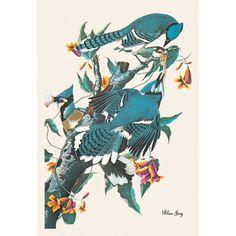 Buyenlarge Blue Jay by John James Audubon Graphic Art on Wrapped Canvas