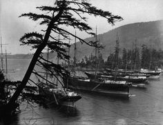 Chuckanut Bay Washington | Cannery tenders in Chuckanut Bay, 1906. Photo source unknown.
