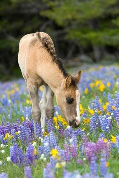 Horse smelling the flowers, how sweet!
