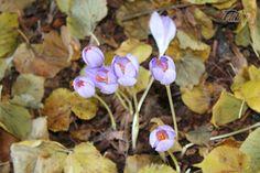 Interesting photograph of small flowers enjoying autumn sunshine  #photo #plants #nature