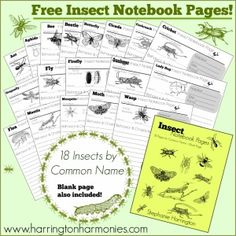 Insect notebooking  Pages