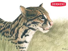 Ocelot by David CookCreated using: Tinted Charcoal