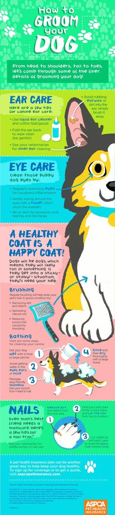 The tips and tricks you need for routine dog grooming.