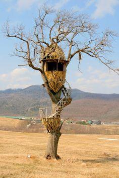 Tree house Naitai Plateau hokkaido Japan